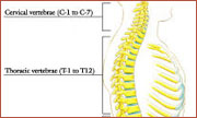 boston spine center provides anatomy for back pain and neck pain,home remedies for back pain South Shore, home remedies for neck pain South Shore, home remedies for back pain Boston, home remedies for neck pain Boston, nonsurgical treatment for back pain south shore, nonsurgical treatment for neck pain south shore, nonsurgical treatment for back pain Boston, nonsurgical treatment for neck pain Boston